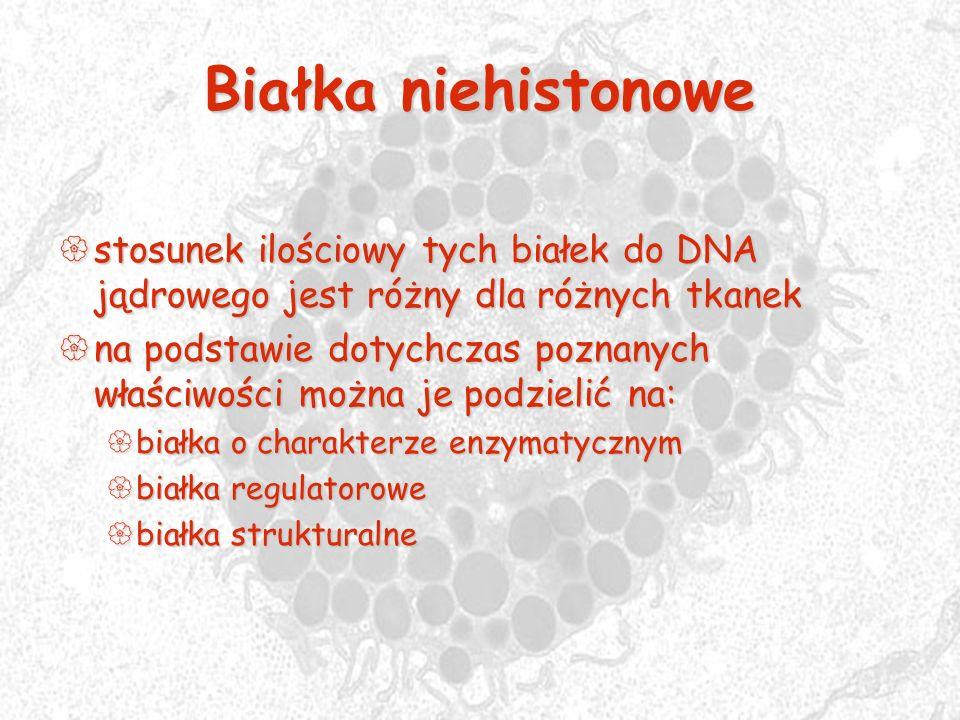 Białka niehistonowe stosunek ilościowy tych białek do DNA jądrowego jest różny dla różnych tkanek.