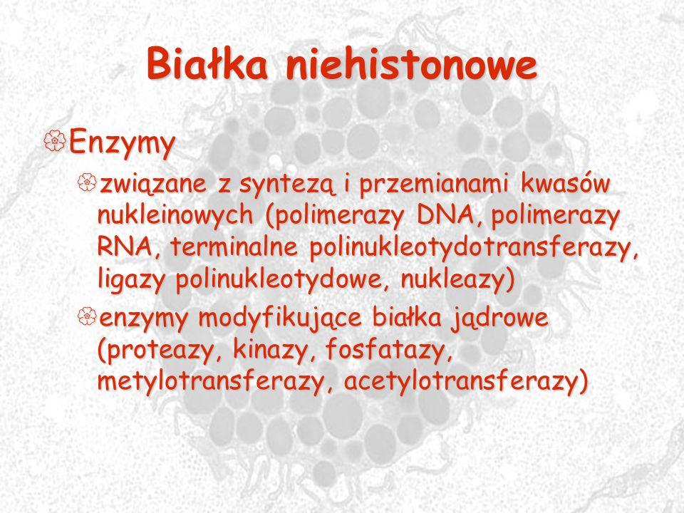 Białka niehistonowe Enzymy