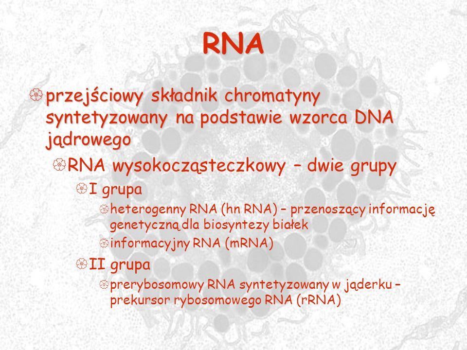 RNAprzejściowy składnik chromatyny syntetyzowany na podstawie wzorca DNA jądrowego. RNA wysokocząsteczkowy – dwie grupy.