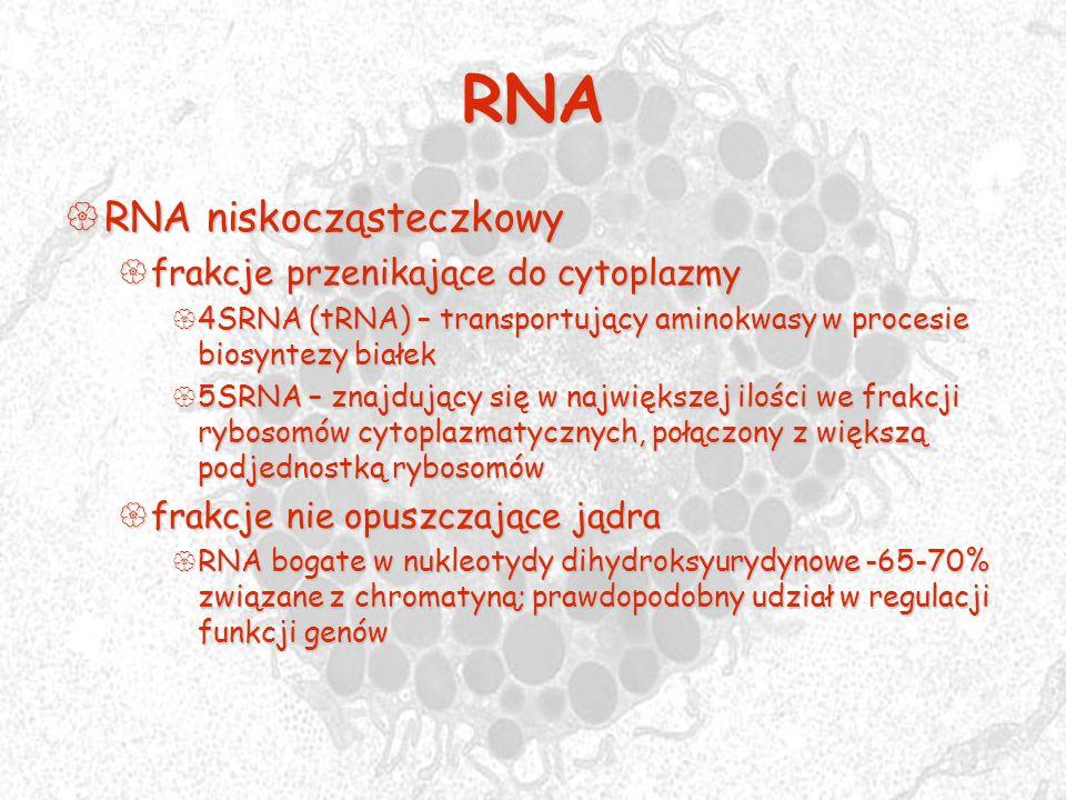 RNA RNA niskocząsteczkowy frakcje przenikające do cytoplazmy