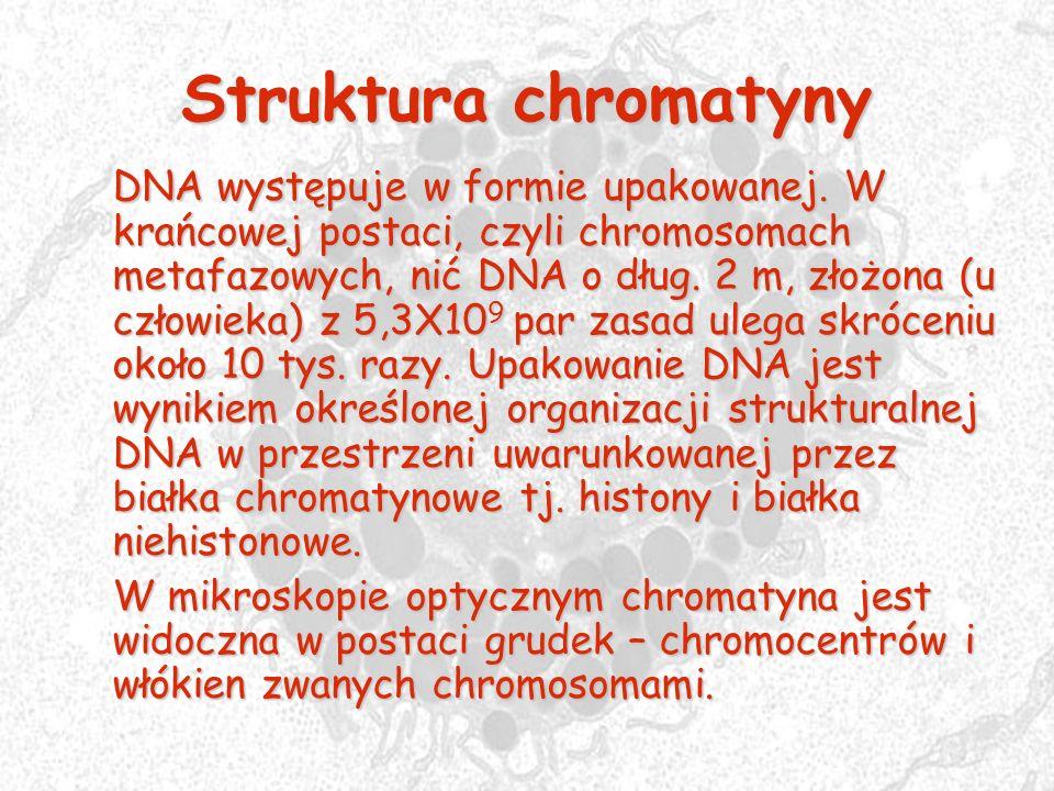Struktura chromatyny