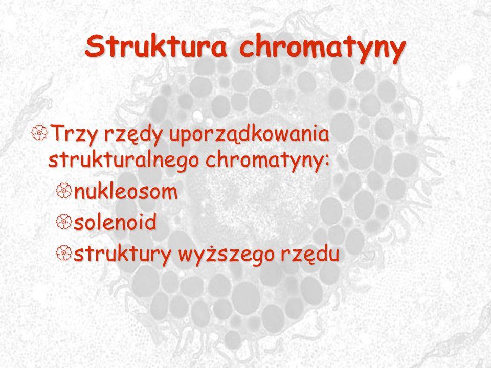 Struktura chromatyny Trzy rzędy uporządkowania strukturalnego chromatyny: nukleosom.
