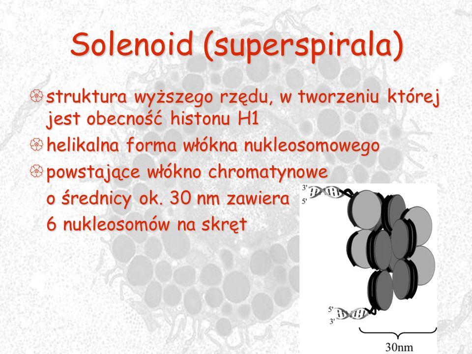 Solenoid (superspirala)