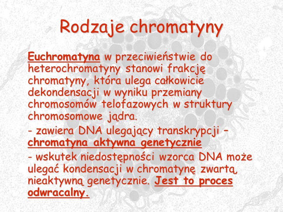 Rodzaje chromatyny