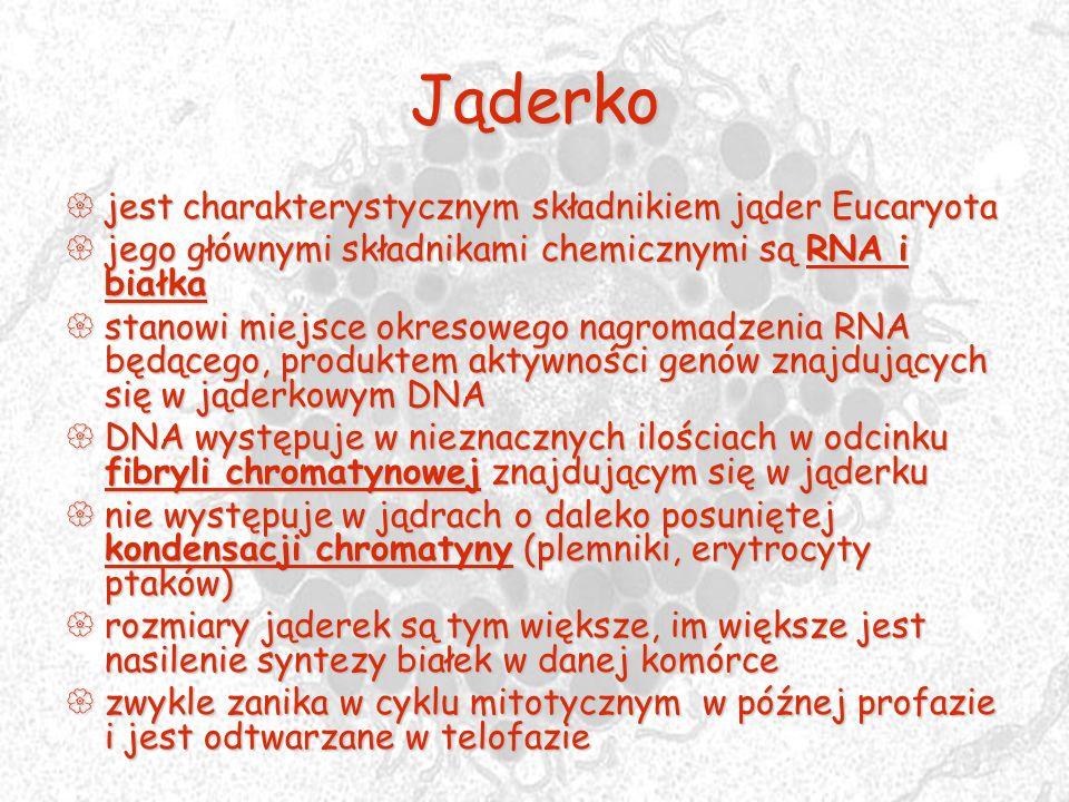 Jąderko jest charakterystycznym składnikiem jąder Eucaryota