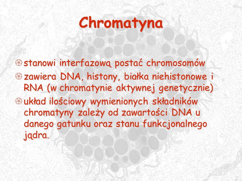 Chromatyna stanowi interfazową postać chromosomów
