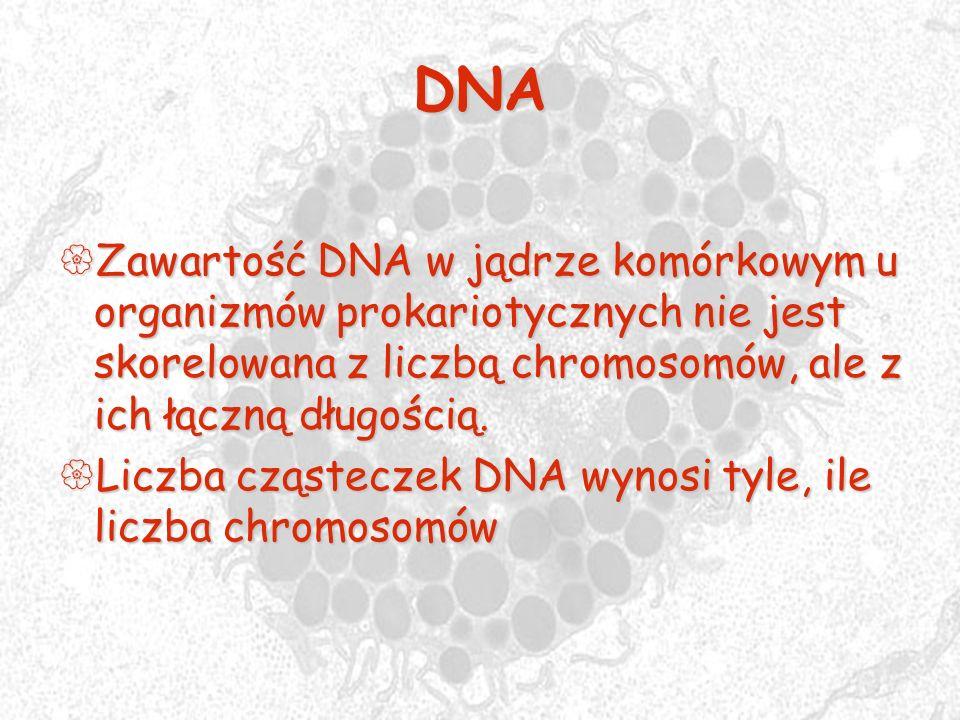DNAZawartość DNA w jądrze komórkowym u organizmów prokariotycznych nie jest skorelowana z liczbą chromosomów, ale z ich łączną długością.