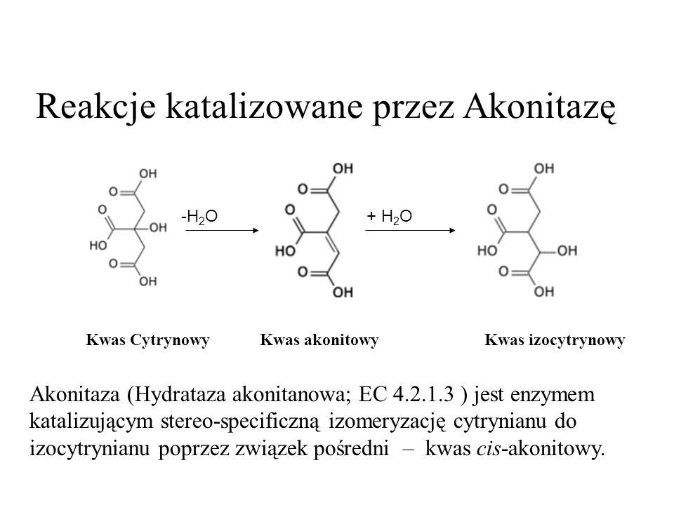 Reakcje katalizowane przez Akonitazę