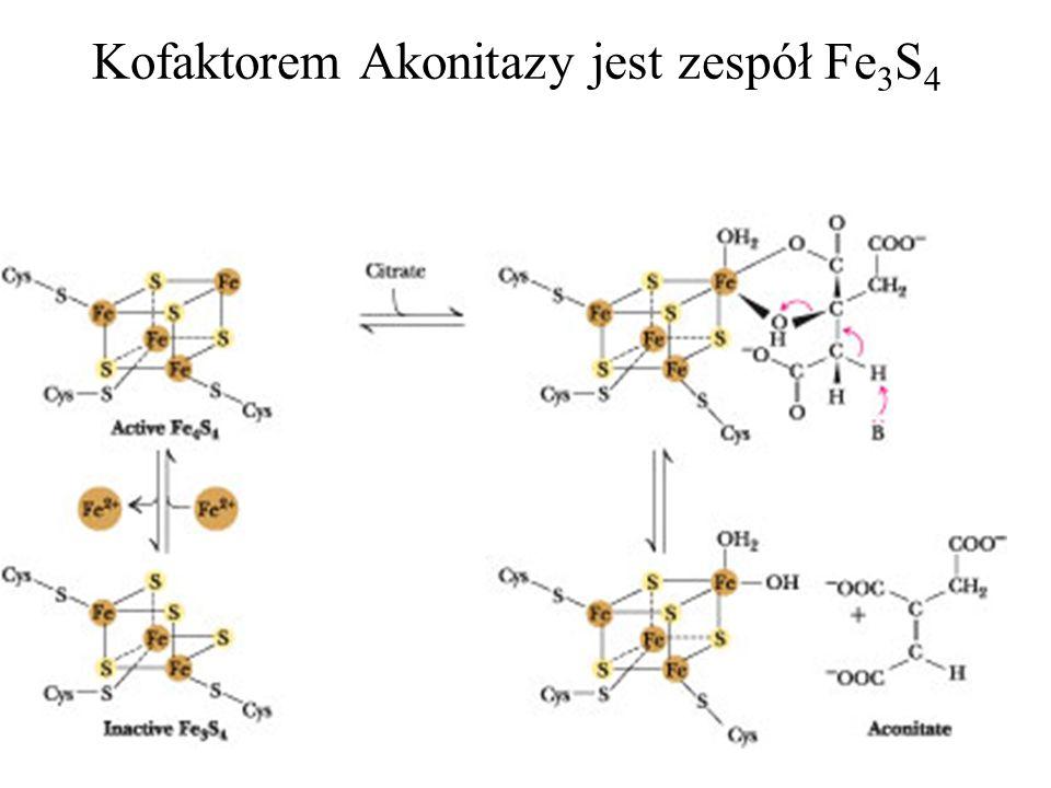Kofaktorem Akonitazy jest zespół Fe3S4