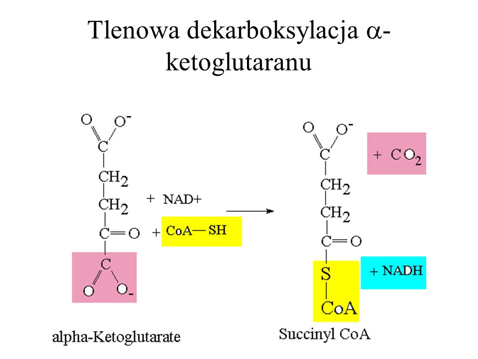 Tlenowa dekarboksylacja -ketoglutaranu