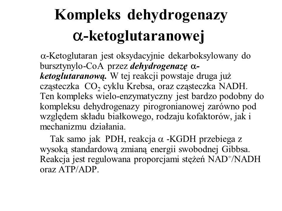 Kompleks dehydrogenazy -ketoglutaranowej