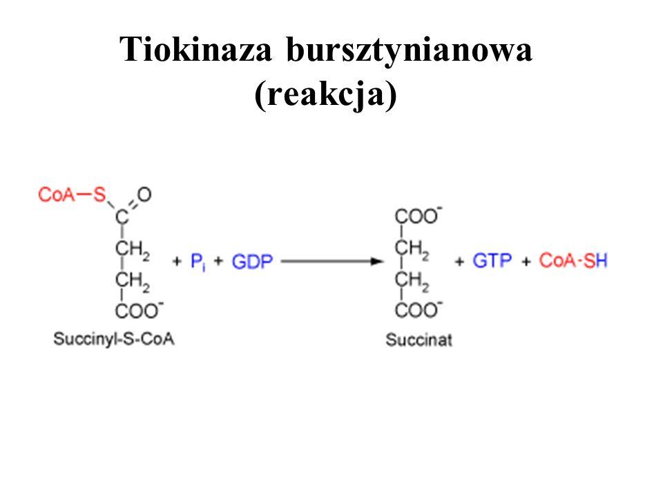Tiokinaza bursztynianowa (reakcja)