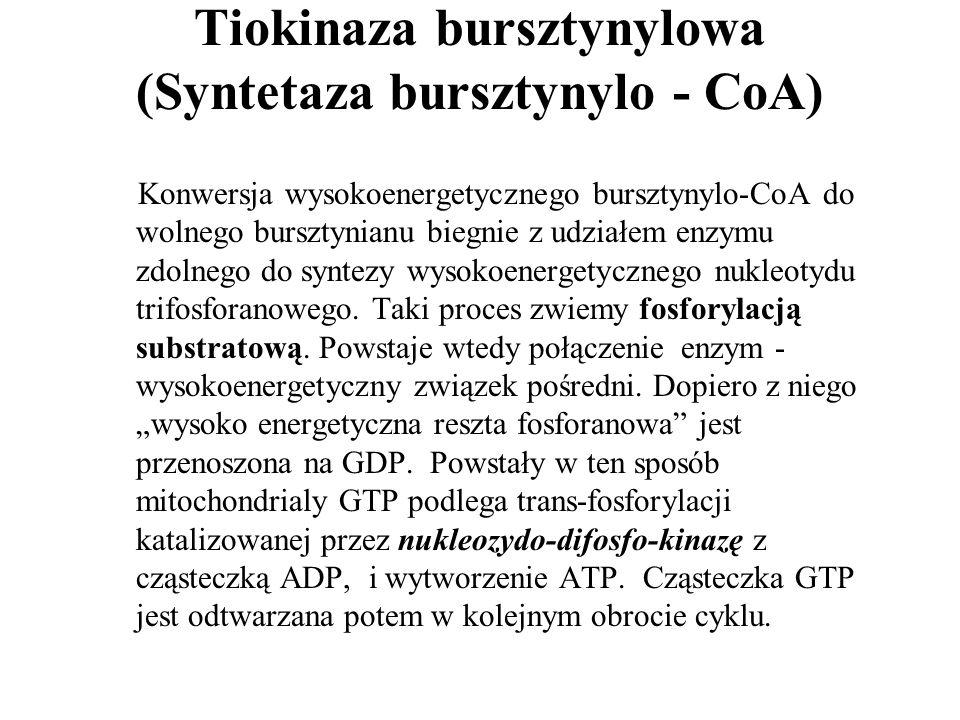 Tiokinaza bursztynylowa (Syntetaza bursztynylo - CoA)