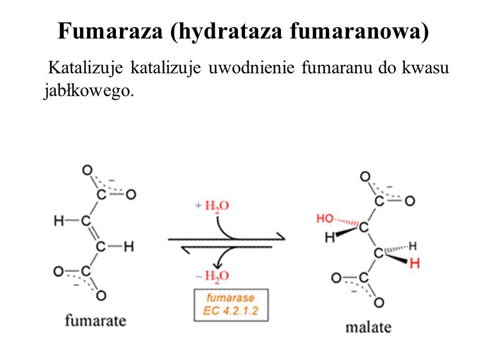 Fumaraza (hydrataza fumaranowa)