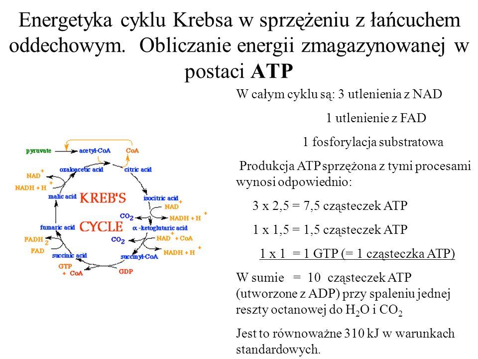 Energetyka cyklu Krebsa w sprzężeniu z łańcuchem oddechowym