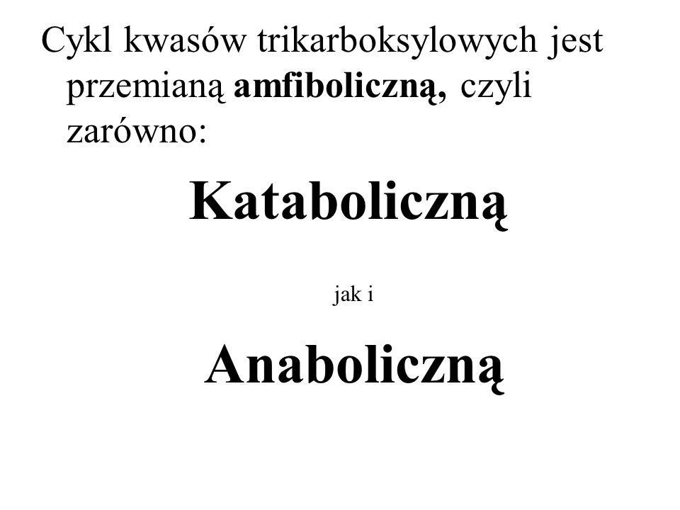 Cykl kwasów trikarboksylowych jest przemianą amfiboliczną, czyli zarówno: