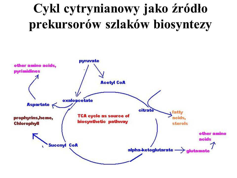 Cykl cytrynianowy jako źródło prekursorów szlaków biosyntezy