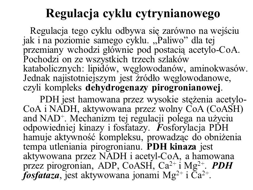 Regulacja cyklu cytrynianowego