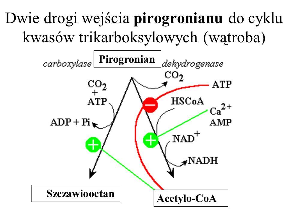 Dwie drogi wejścia pirogronianu do cyklu kwasów trikarboksylowych (wątroba)