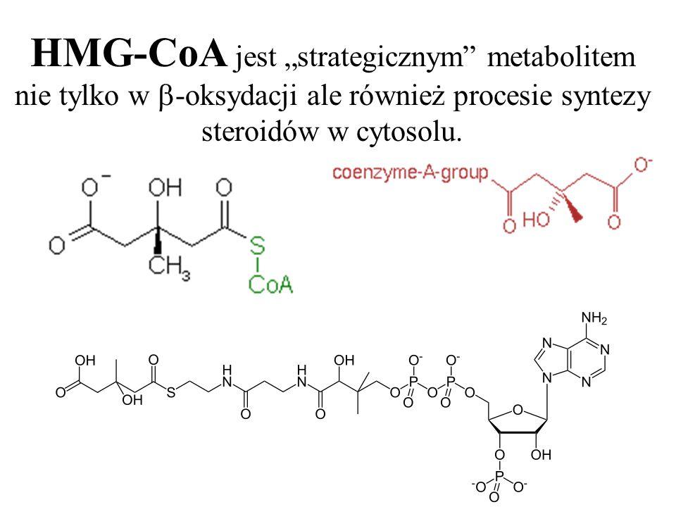 """HMG-CoA jest """"strategicznym metabolitem nie tylko w -oksydacji ale również procesie syntezy steroidów w cytosolu."""