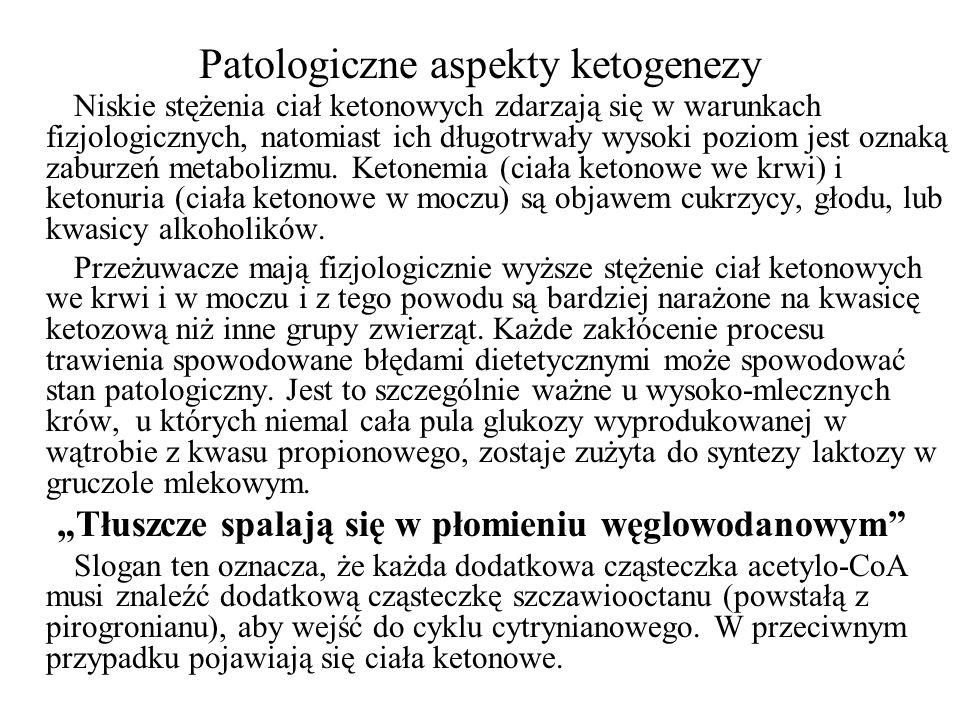Patologiczne aspekty ketogenezy