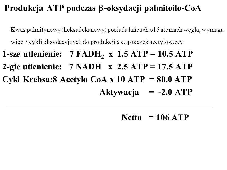Produkcja ATP podczas -oksydacji palmitoilo-CoA