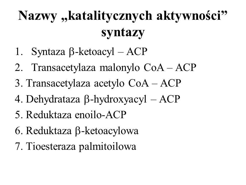 """Nazwy """"katalitycznych aktywności syntazy"""