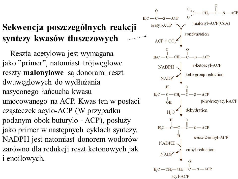 Sekwencja poszczególnych reakcji syntezy kwasów tłuszczowych