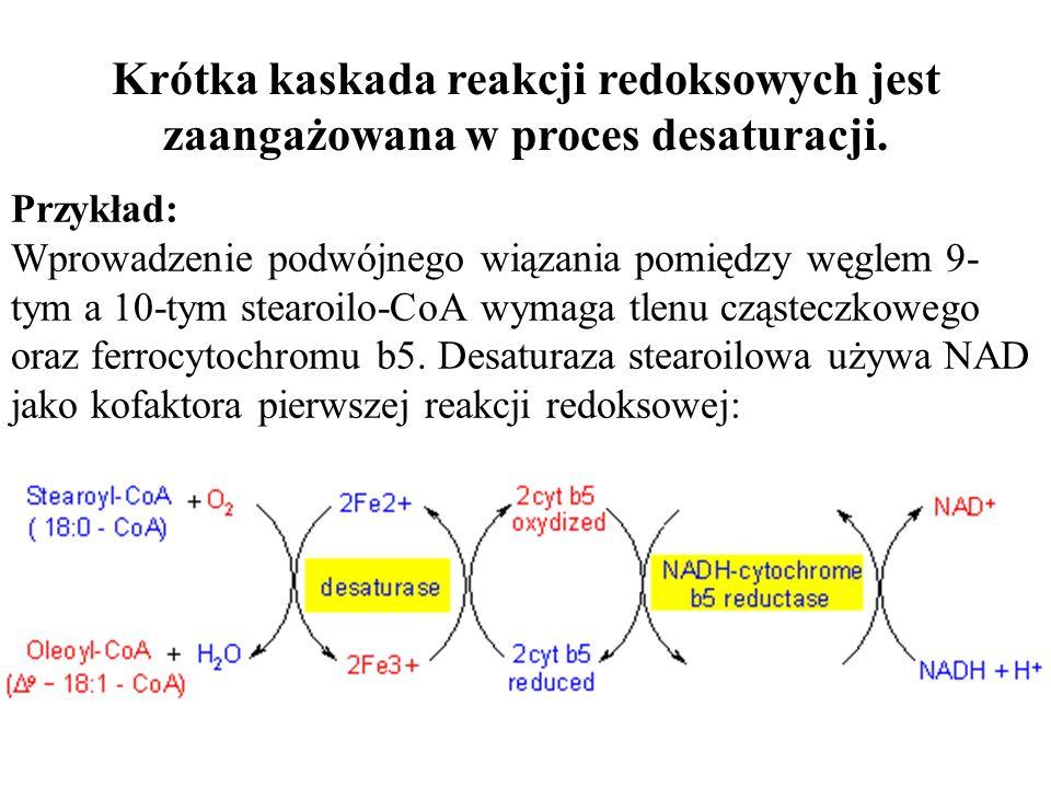 Krótka kaskada reakcji redoksowych jest zaangażowana w proces desaturacji.