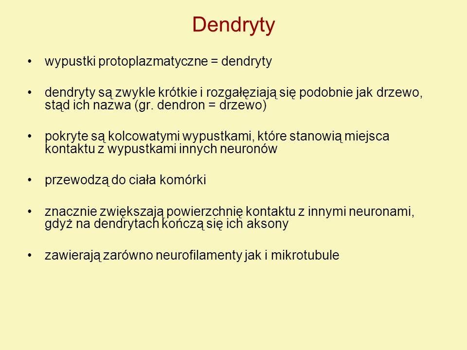 Dendryty wypustki protoplazmatyczne = dendryty