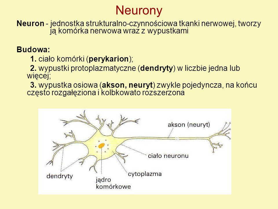 Neurony Neuron - jednostka strukturalno-czynnościowa tkanki nerwowej, tworzy ją komórka nerwowa wraz z wypustkami.