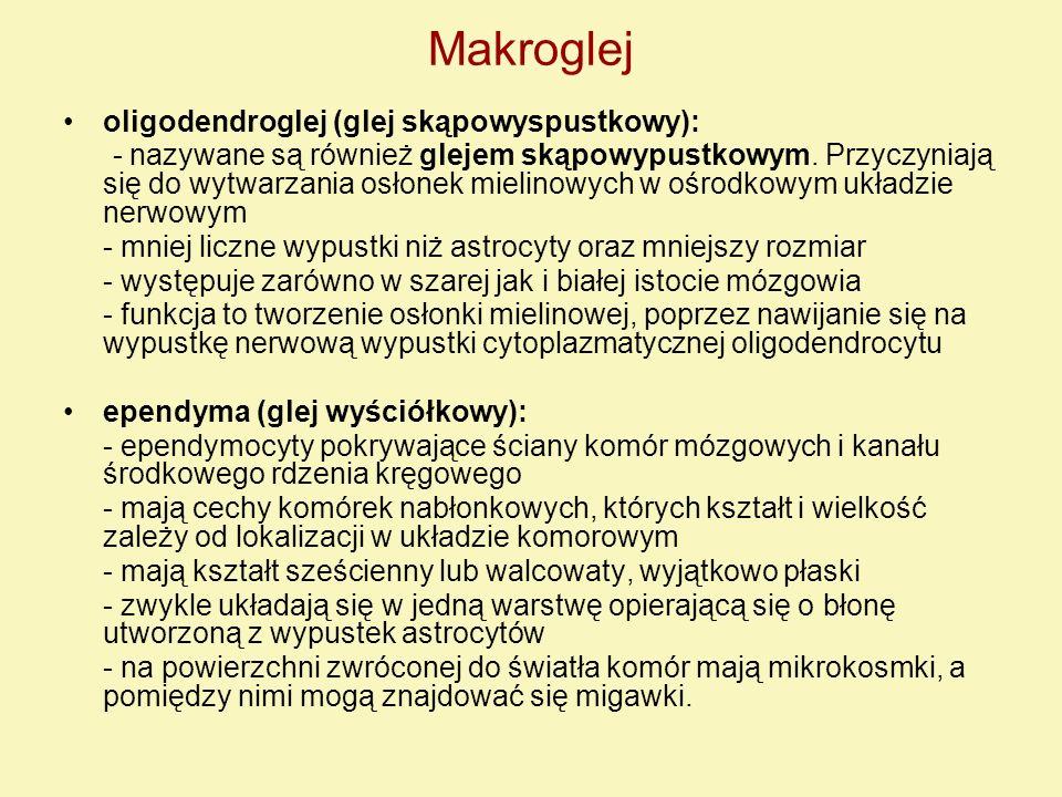 Makroglej oligodendroglej (glej skąpowyspustkowy):