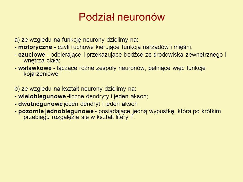 Podział neuronów a) ze względu na funkcję neurony dzielimy na: