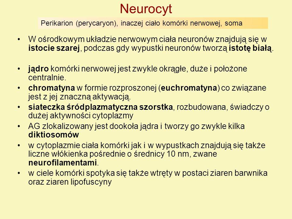 Neurocyt Perikarion (perycaryon), inaczej ciało komórki nerwowej, soma.