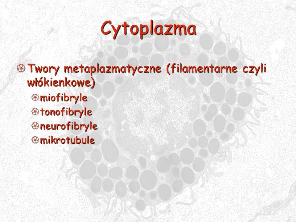 Cytoplazma Twory metaplazmatyczne (filamentarne czyli włókienkowe)