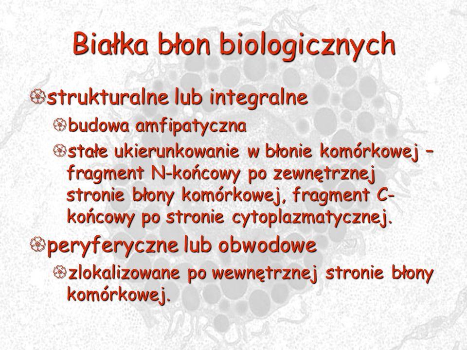 Białka błon biologicznych