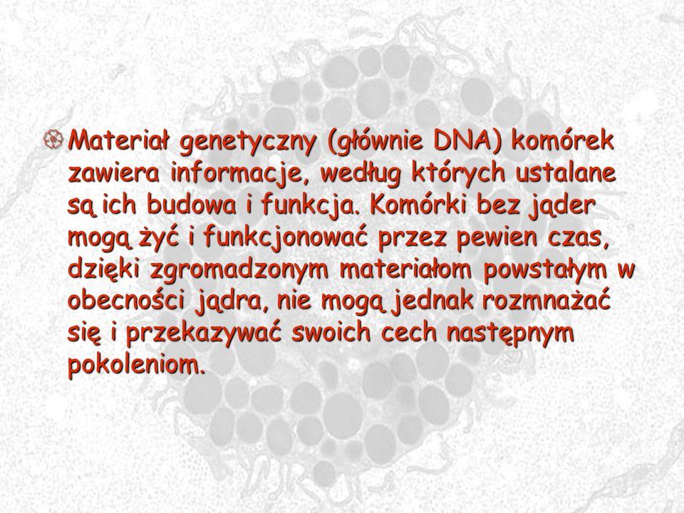 Materiał genetyczny (głównie DNA) komórek zawiera informacje, według których ustalane są ich budowa i funkcja.