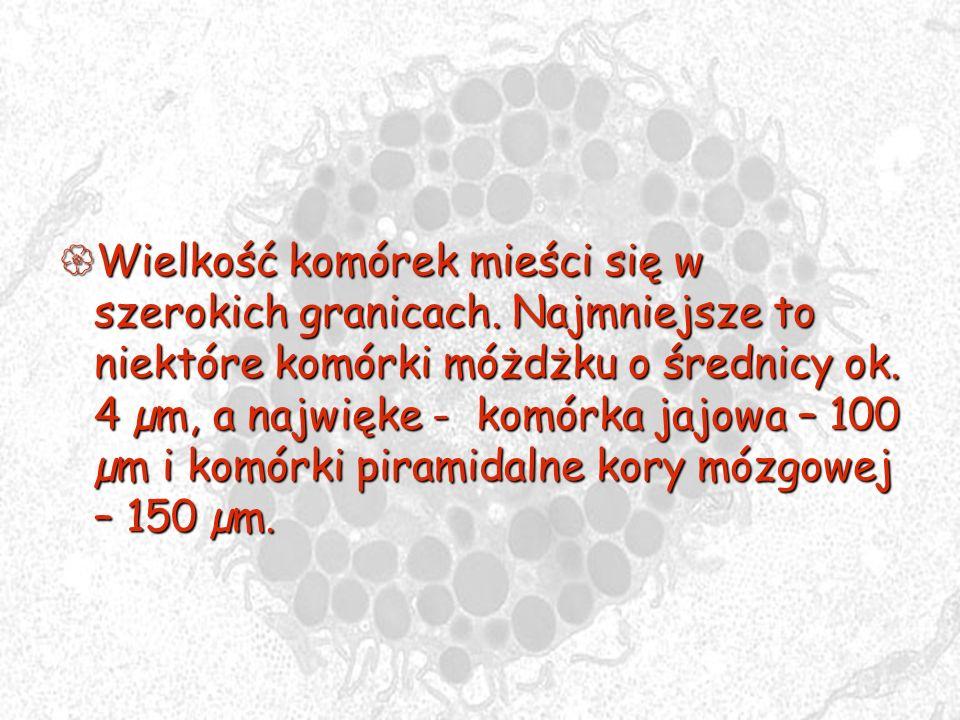Wielkość komórek mieści się w szerokich granicach