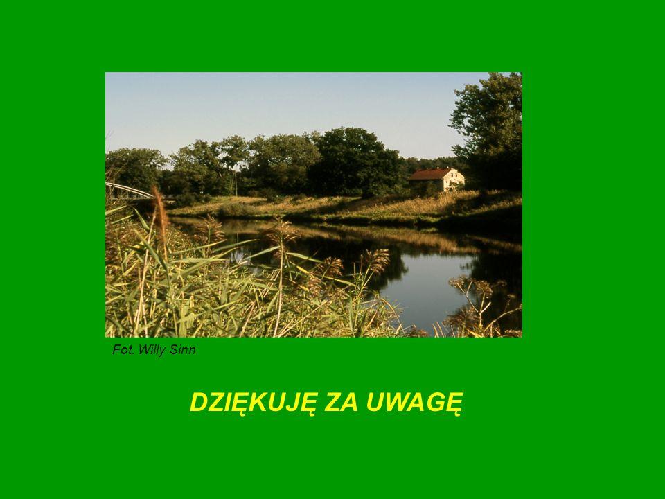Fot. Willy Sinn DZIĘKUJĘ ZA UWAGĘ