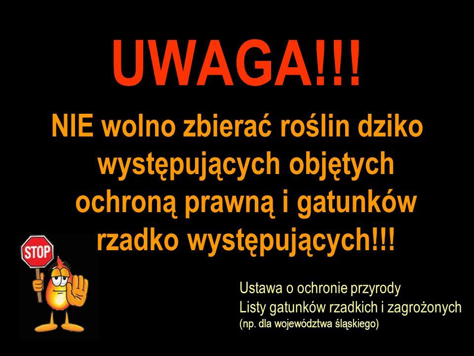 UWAGA!!! NIE wolno zbierać roślin dziko występujących objętych ochroną prawną i gatunków rzadko występujących!!!