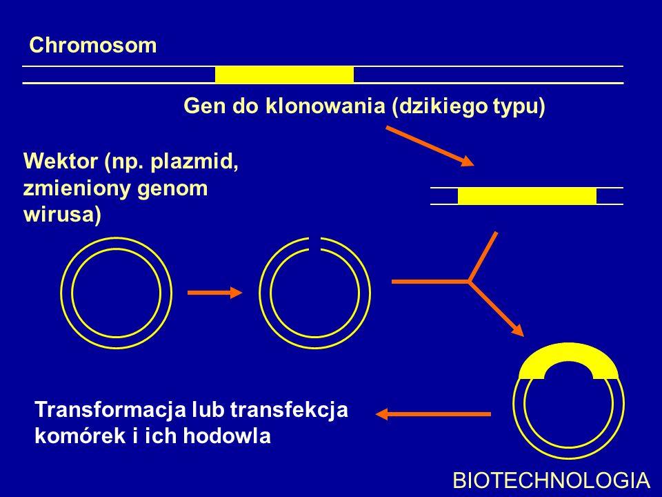 Chromosom Gen do klonowania (dzikiego typu) Wektor (np. plazmid, zmieniony genom wirusa) Transformacja lub transfekcja.