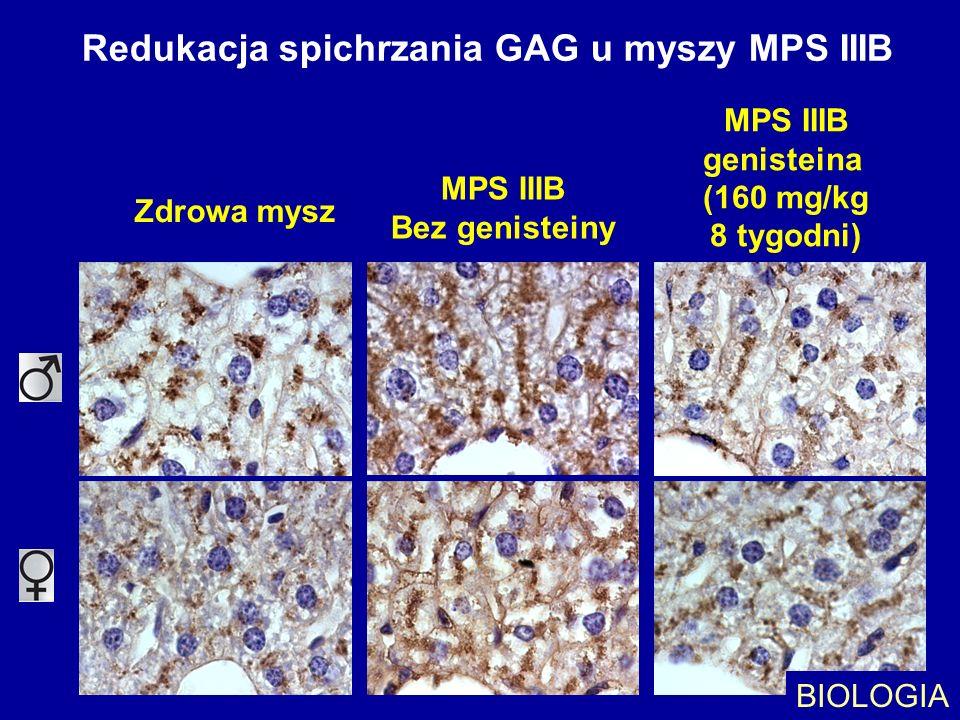 Redukacja spichrzania GAG u myszy MPS IIIB