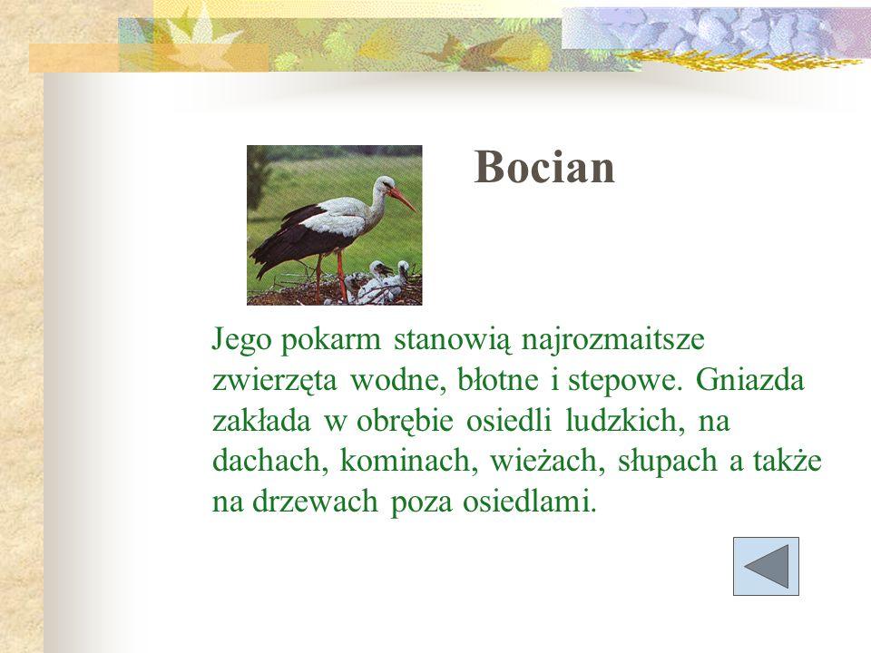 Bocian