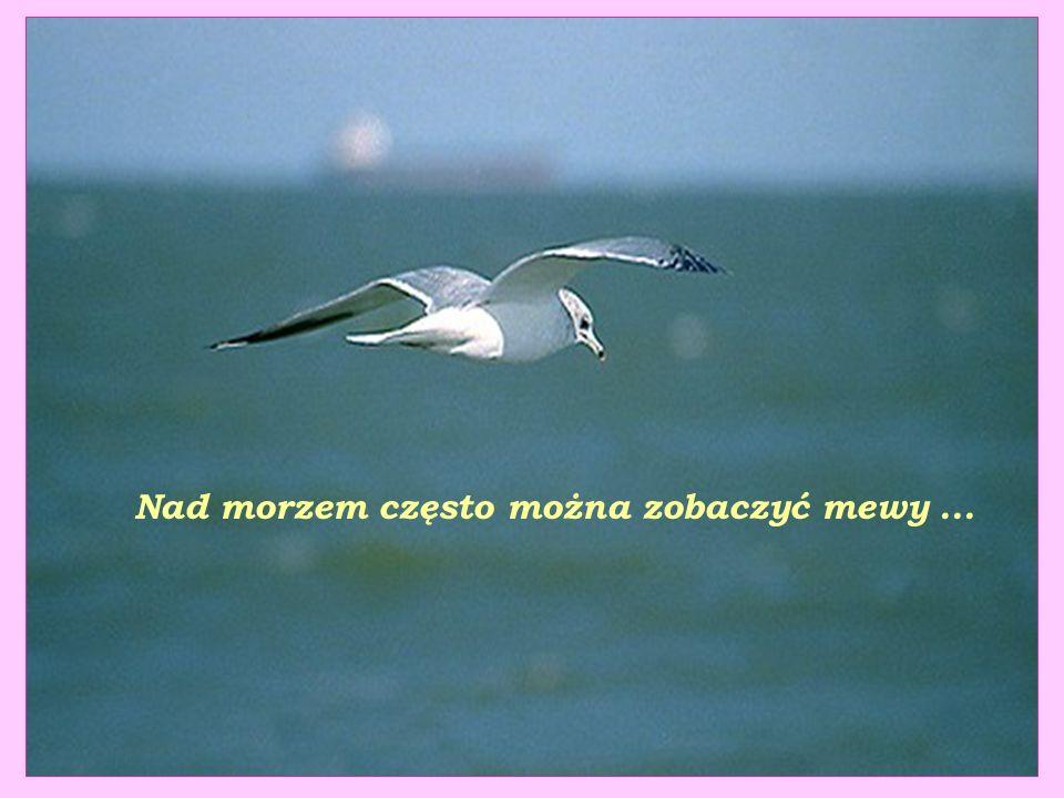 Nad morzem często można zobaczyć mewy ...