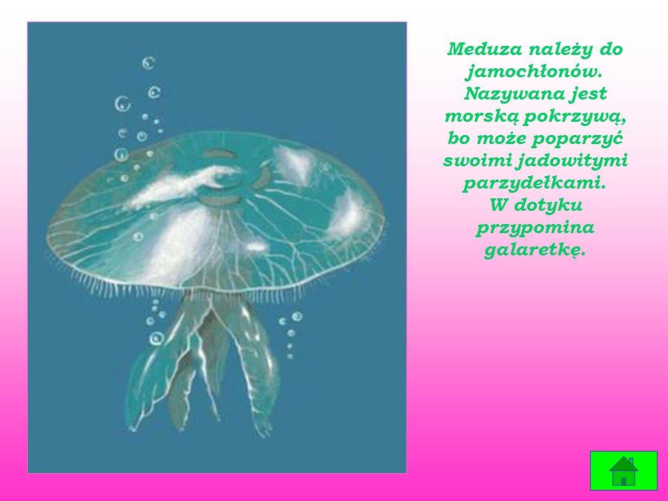 Meduza należy do jamochłonów