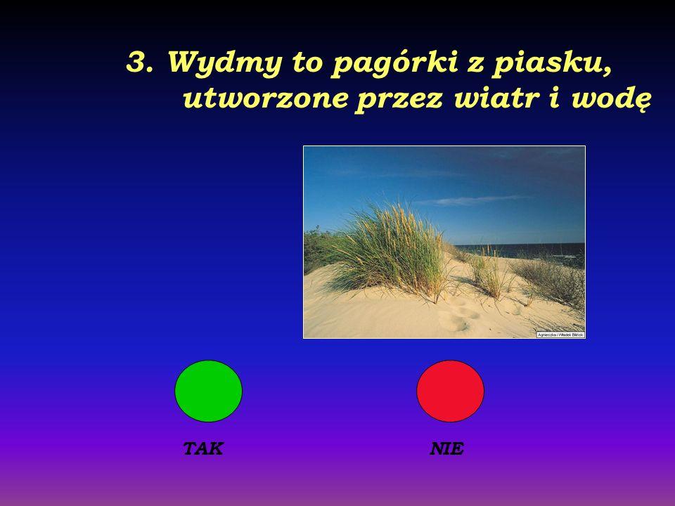 3. Wydmy to pagórki z piasku, utworzone przez wiatr i wodę