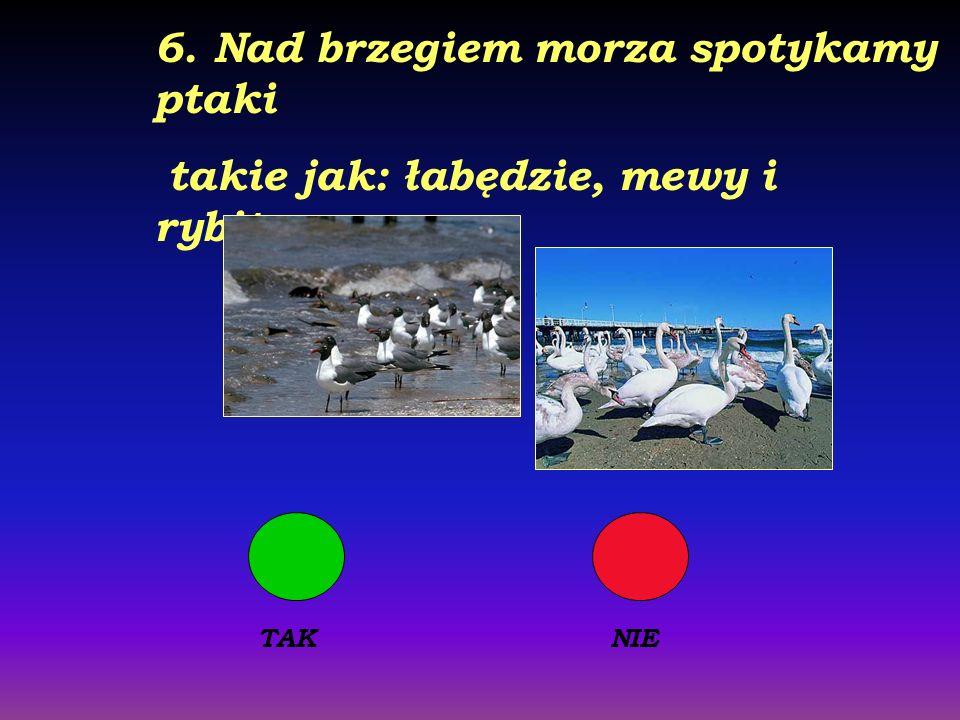 6. Nad brzegiem morza spotykamy ptaki