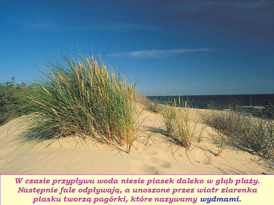 W czasie przypływu woda niesie piasek daleko w głąb plaży