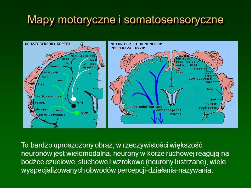 Mapy motoryczne i somatosensoryczne