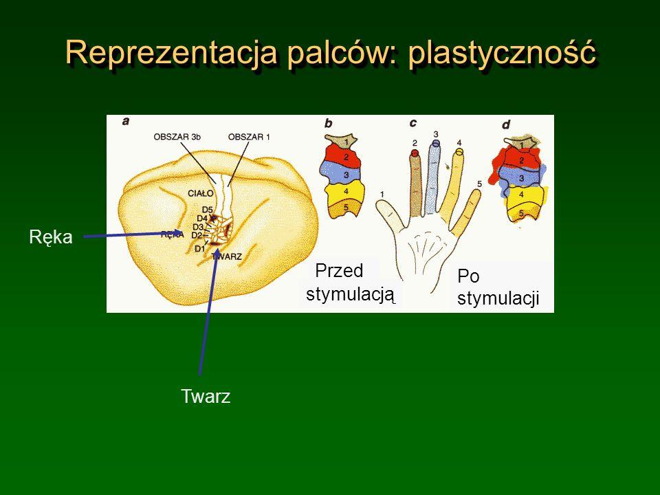 Reprezentacja palców: plastyczność